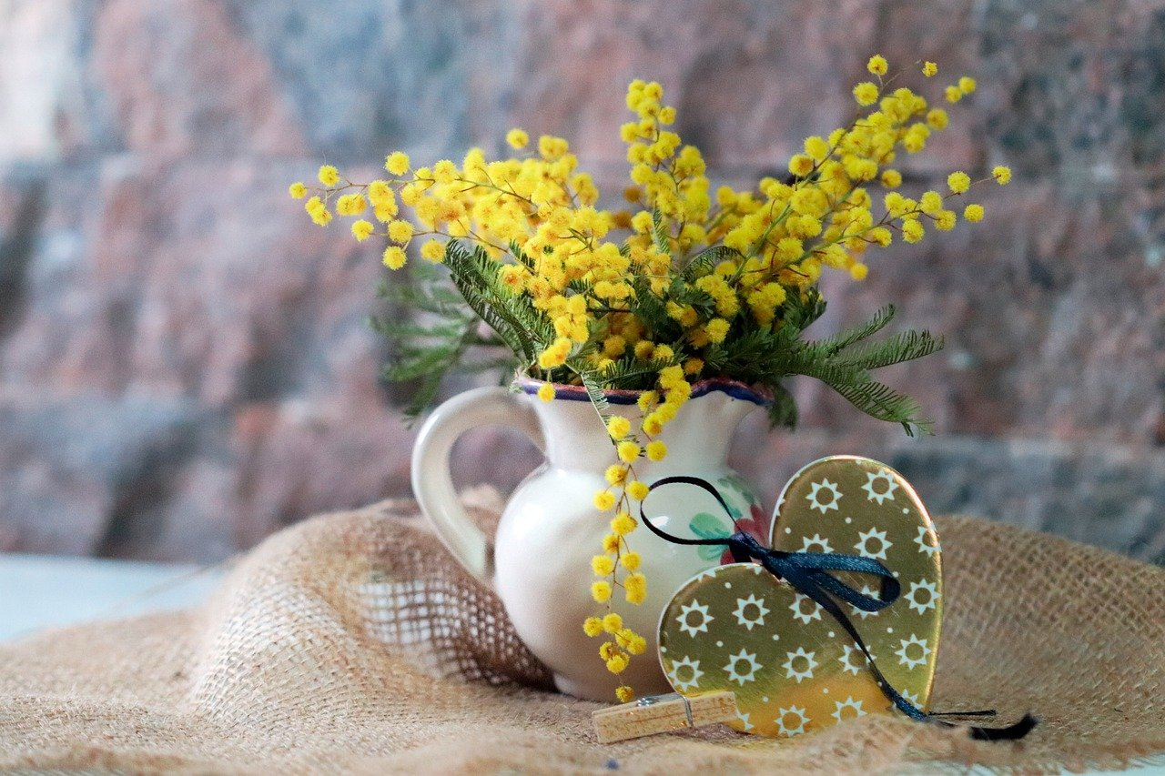 mimosa, flowers, gift
